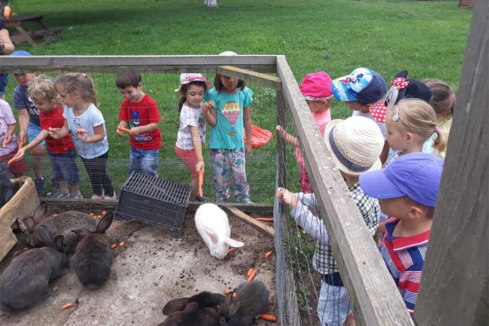 Grădinița Căsuța din pădure • activități extracurriculare